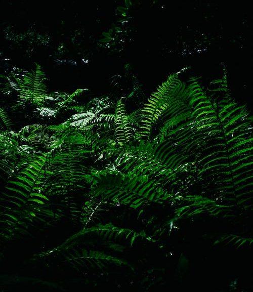 Rain forest encounter scorpion escape