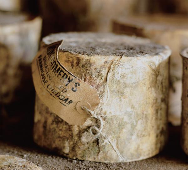Gourmet menu of wine and cheese